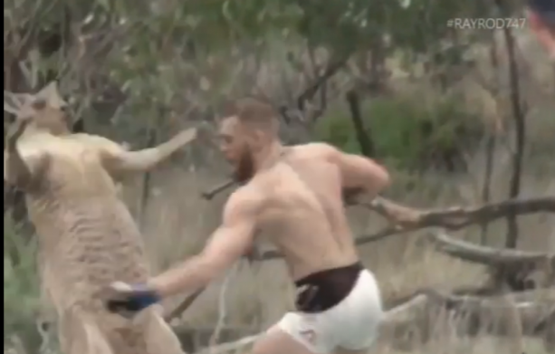 Conor McGregor Fights The Kangaroo For Putting Hands On The Dog!