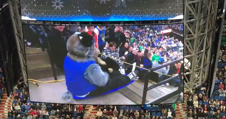 The Timberwolves Mascot Went Sledding Down The Stairs
