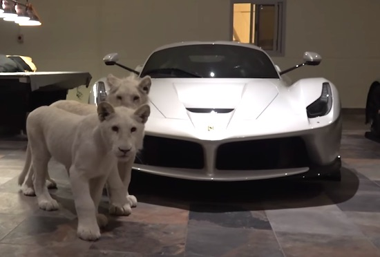 Rare White Lions & Supercars… Now I've Seen it All