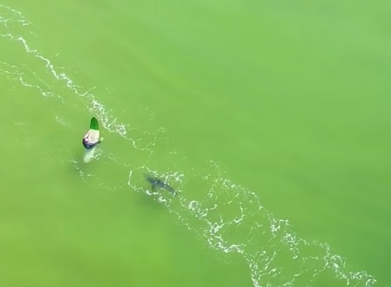 Video: Great White Caught On Tape Charging at Surfers