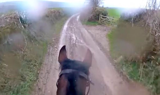 Man Takes A Retired Race Horse Out For A Casual Ride LOL