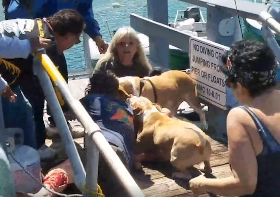 Old Lady Gets Attacked By Pitbull On Video