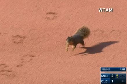 A Squirrel Added Some Excitement To An Indians Game