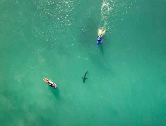 Big Shark Stops Surfers Mick Fanning & Gabriel Medina