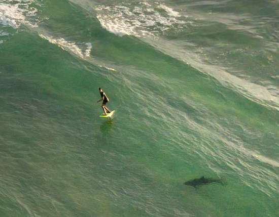6ft Monster Shark Spotted Right By Surfer