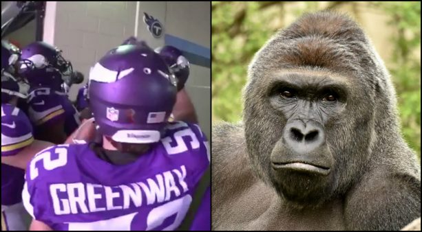 Harambe Got Some Love in the Vikings Huddle