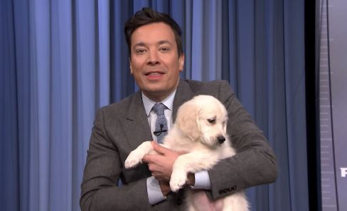 Jimmy Fallon Predicts The Super Bowl Winner With Puppies