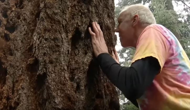 Bill Walton Is A Woodpecker