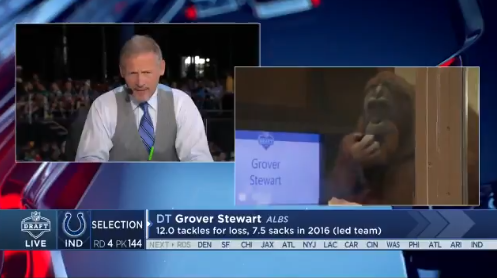 The Colts Used An Orangutan To Announce Draft Picks