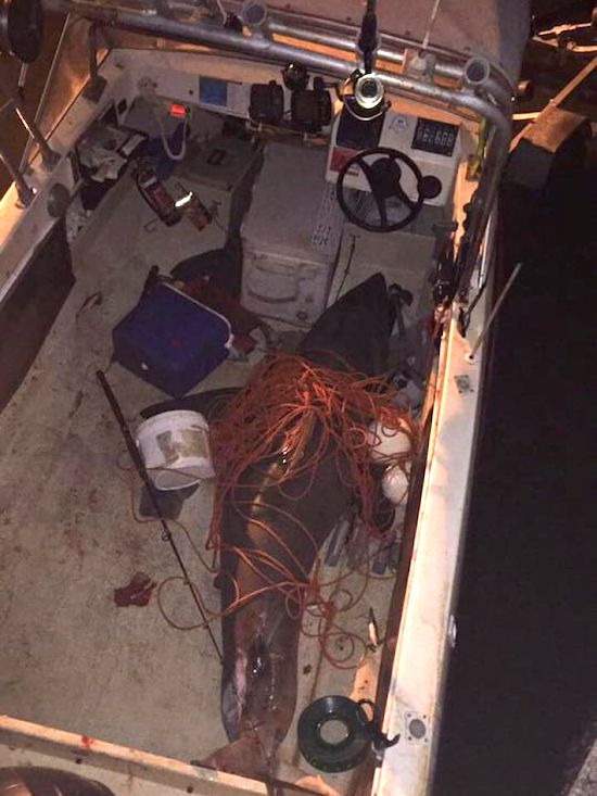 Great White Shark Jumps Into Boat ⋆ Terez Owens : #1 Sports Gossip Blog in the World