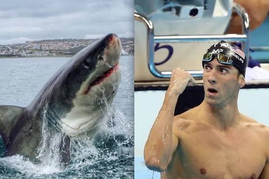 Phelps Vs. Shark: The Battle for Ocean Supremacy