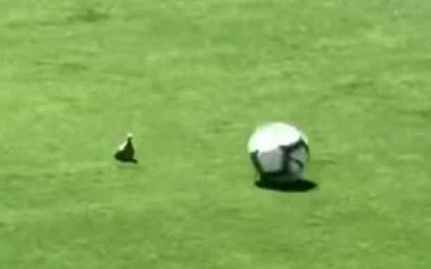 Manchester United Defender Kicks The Sh*T Out Of A Bird On The Field (VIDEO)