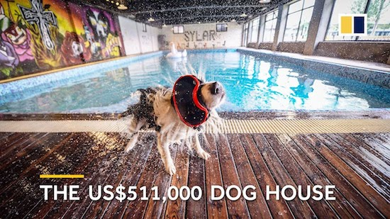 Video- Guy Builds His Dog $500k House